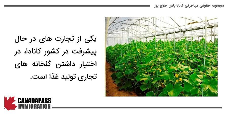 تصویر گلخانه تولید غذا