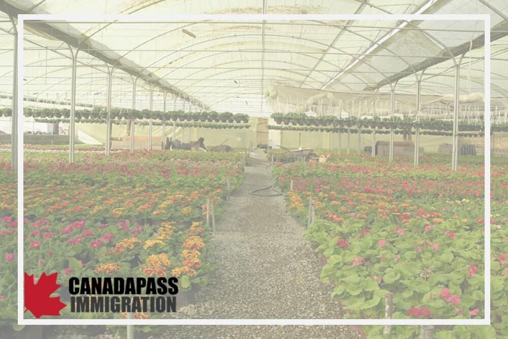 خرید گلخانه در کانادا